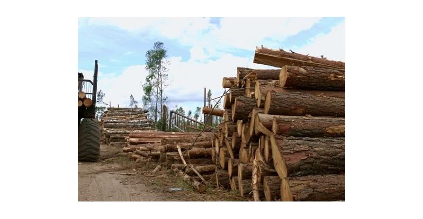 معرفی انواع چوب صنعتی